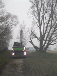 Baum rechts mit abgesägten Ästen, die über die geplante Trasse der Baustraße ragten.