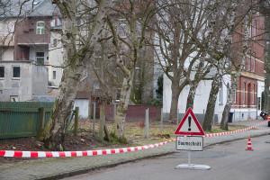 Bäume an der Allerstraße. Foto: Gegenwind