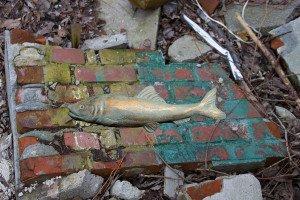 Wer erinnert sich? Diese Fischlein zierten einst die Mauer des Jadebades und wurden nun wiederentdeckt. Foto: Gegenwind